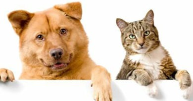Vacinação de cães e gatos está suspensa