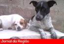 Interessados em castração de cães e gatos devem fazer inscrição