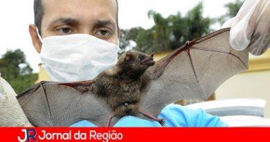 Morcegos voltam a preocupar moradores de Cabreúva