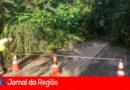 Defesa Civil trabalha para remoção de árvore