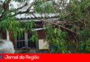 Árvore cai em cima de casa na Vila Rio Branco