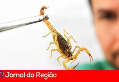 Leitora reclama de escorpiões no Novo Horizonte