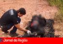 Polícia tenta identificar homem queimado