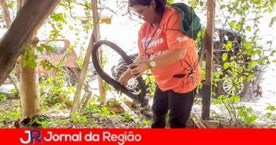 Jundiaí já tem 31 notificações de dengue este ano