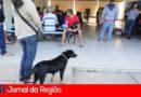 2.800 cães e gatos foram castrados em 2019