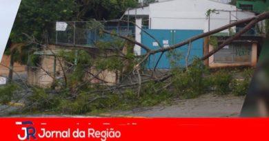 Árvore cai no portão de Escola