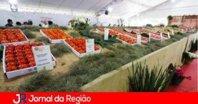 Itatiba prepara a 17ª Festa do Caqui e Cia