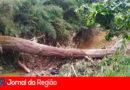"""Árvore cai e faz """"represa"""" no Rio, em Campo Limpo"""