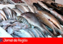 IPEM orienta consumidor na compra de peixes e ovos de Páscoa