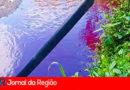 """""""Suco de morango"""" pode ter sido despejado no Rio Capivari"""