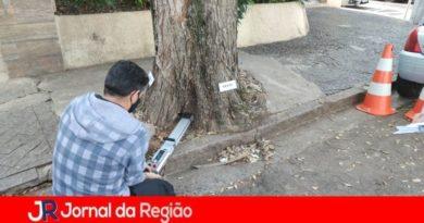 Jundiaí faz diagnóstico preventivo de árvores na Rua Anchieta