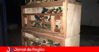 Mata Ciliar de Jundiaí leva aves silvestres ao habitat de origem