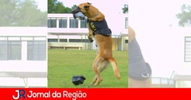 Morre Athon, premiado cão da GM de Jundiaí