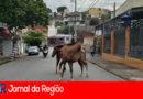 Cavalos circulam por ruas do Jardim Tamoio