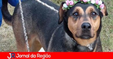 Cães ficam sem lar após donos morrerem de Covid