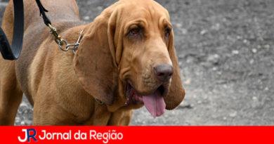 Cão da GMJ auxilia nas buscas de idoso desaparecido em Artur Nogueira