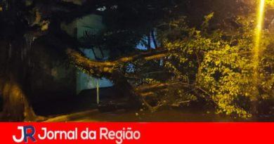 Árvore cai na Vila Hortolândia