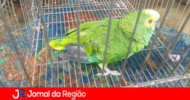 Papagaio é localizado pela Guarda Florestal