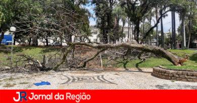 Árvore grande cai no Centro de Jundiaí