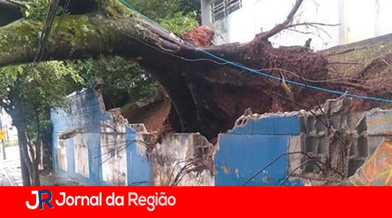 Árvore de grande porte cai em Jundiaí