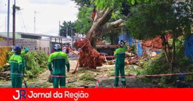 Equipes da Prefeitura trabalham neste domingo na remoção de árvores caídas