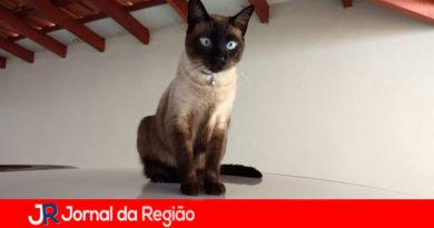 Gatinha está desaparecida em Jundiaí