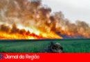 Ministério Público e Polícia vão investigar queimadas em vegetações