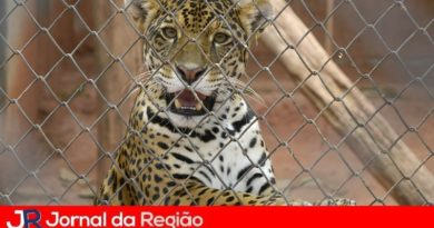 Prefeitura de Jundiaí emite nota oficial sobre a Mata Ciliar