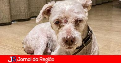 DEBEA atende denúncia de cachorro idoso abandonado