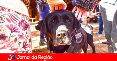 Cães da Guarda animam crianças de abrigo