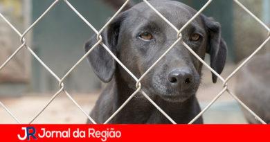 Prefeitura prepara 'protetores de animais', em curso