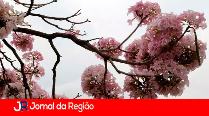 Início da Primavera. (Foto: Divulgação)
