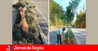 Plantação de árvore. (Foto: Divulgação)